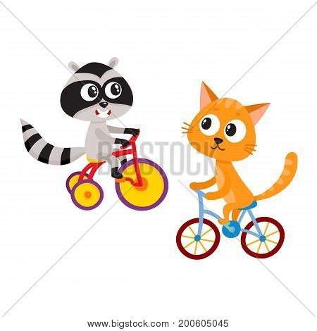 Cute little raccoon and cat characters riding bicycles together, cartoon vector illustration isolated on white background. Baby raccoon and cat animal characters riding bicycle and tricycle