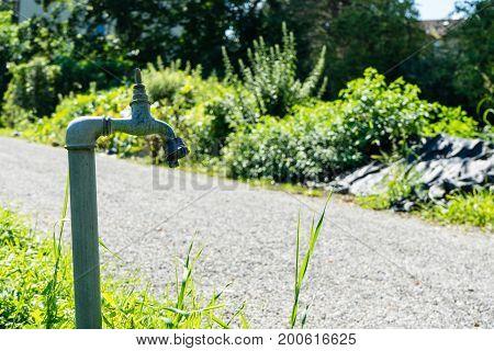 water pipe tab in front of urban garden in summer