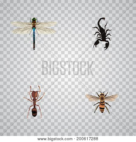 Realistic Damselfly, Emmet, Poisonous And Other Vector Elements