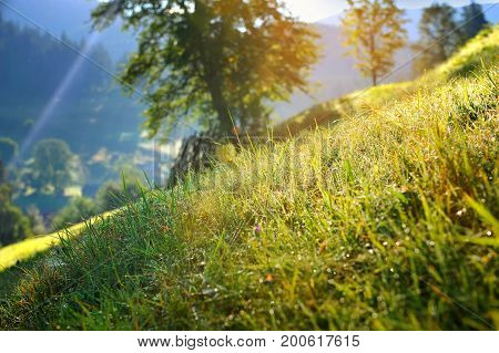 Grass With Dew In The Sun. Sunny Morning In The Mountains.