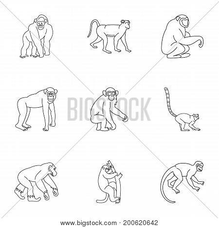 Jungle monkey icon set. Outline set of 9 jungle monkey vector icons for web isolated on white background
