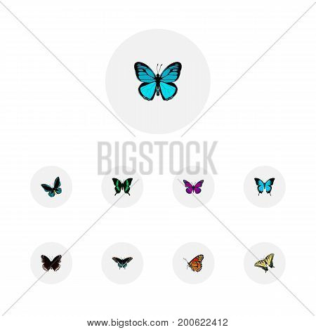 Realistic Checkerspot, Papilio Ulysses, Spicebush And Other Vector Elements