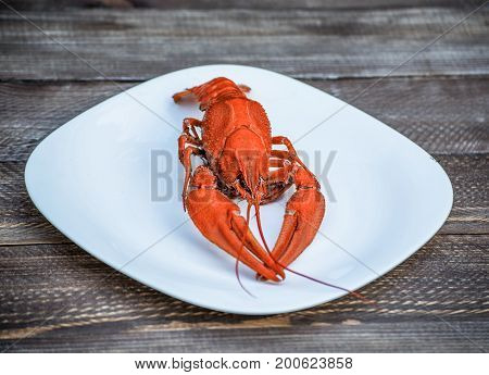 Boiled red crawfish on a white plate on a wooden background. Tasty red steamed rawfish closeup on wood table, seafood dinner, nobody. Copy space for your text