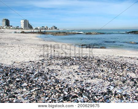 FROM BLOUBERG STRAND, CAPE TOWN, SOUTH AFRICA, SEA SHELLS IN THE FORE GROUND AND BUILDINGS IN THE BACK GROUND