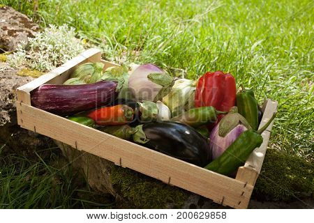 Assortment Of Organic Vegetables In A Wooden Crate