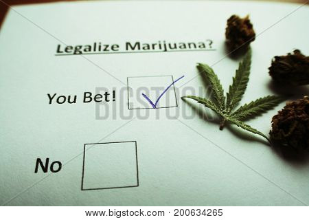 Legalize Marijuana Ballot With Buds High Quality