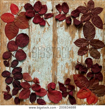 Flat lay frame of autumn crimson leaves on a blue wooden background. Selective focus.
