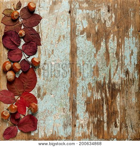 Flat lay frame of autumn crimson leaves hazelnuts and walnuts on a blue wooden background. Selective focus.