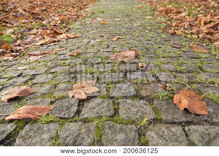 old paving cobbled stones footpath in autumn park