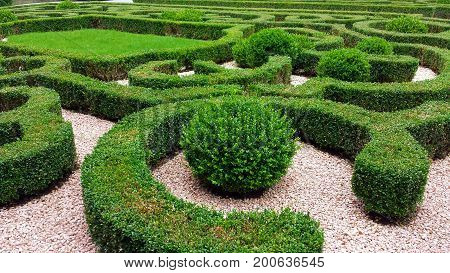 Ornamental hedges in the park, various boxwood shapes
