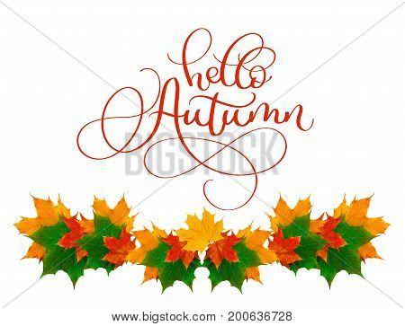 calligraphy lettering text hello Autumn. beautiful frame of yellow leaves.