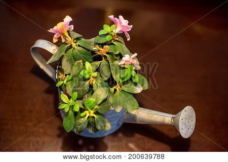 Close up small beautiful watering pot with flowers in it