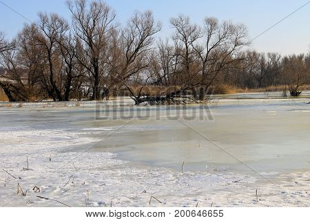 Winter Meadow With Frozen Water And Trees