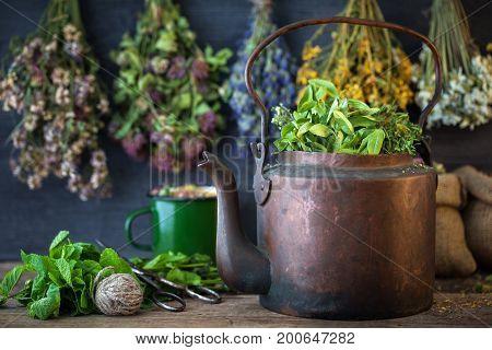 Vintage Copper Tea Kettle, Medicinal Plants For Healthy Herbal Tea And Hanging Healing Herbs. Herbal