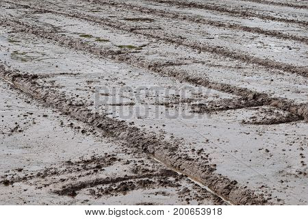 soil mud in rice field prepare for plant rice in agriculture