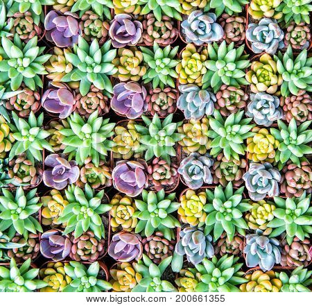 Close up of agave succulent plant