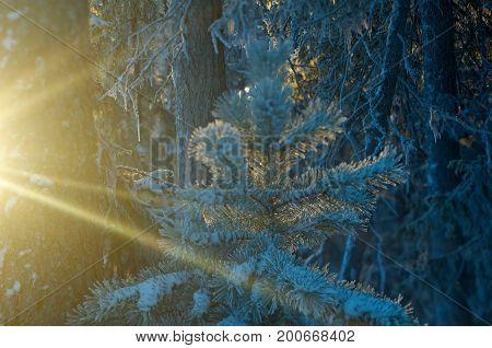 snowfall  russian Winter landscape .frozen taiga forest