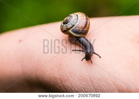 Small Cute Snail Crawling On Hand