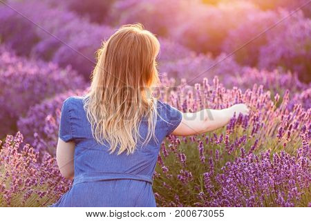 Young woman picking lavender flowers at sunset. Romantic warm sunshine