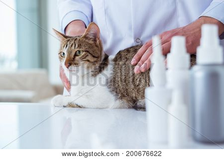 Cat visiting vet for regular checkup