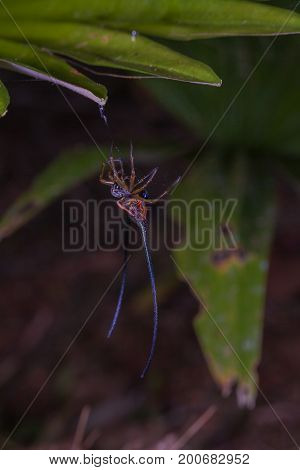 Beautiful Spider Long Horn On The Leaf