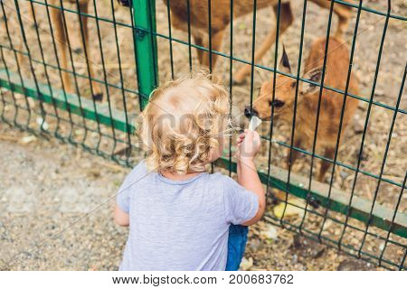 Todler Girl Feeds A Small Deer In The Zoo
