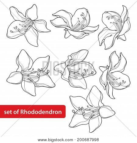Vector set with outline Rhododendron or Alpine rose flower isolated on white background. Evergreen mountain shrub. Flowers in contour style for summer or herbal medicine design and coloring book.