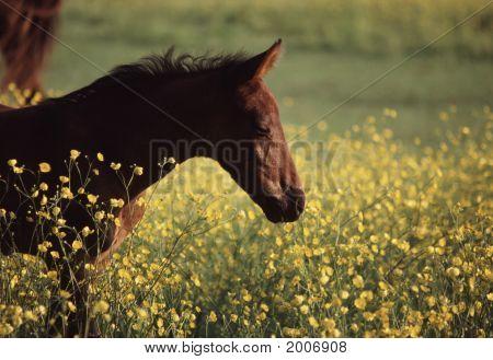 Horse Paradise Horizontal