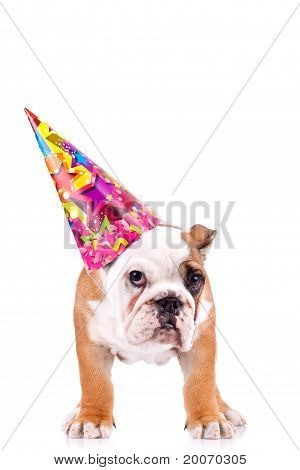 English Bulldog Puppy With A Party Hat