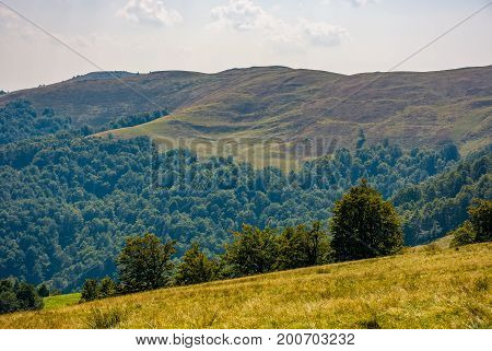 Beech Forest On Grassy Hillside In Autumn