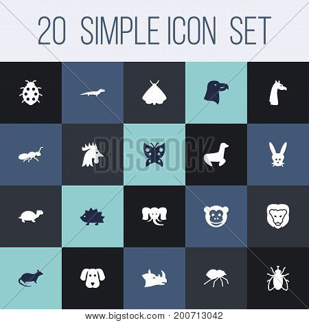 Collection Of Tortoise, Porcupine, Aquila And Other Elements.  Set Of 20 Animal Icons Set.