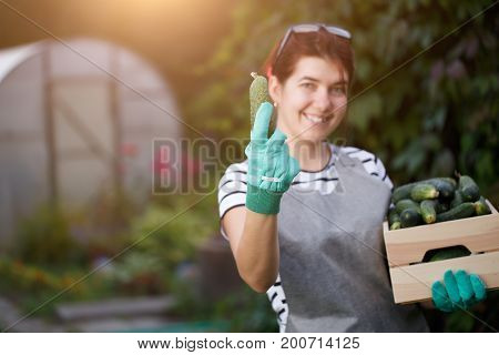 Portrait of young brunette agronomist with crop of cucumbers in box on background of plant