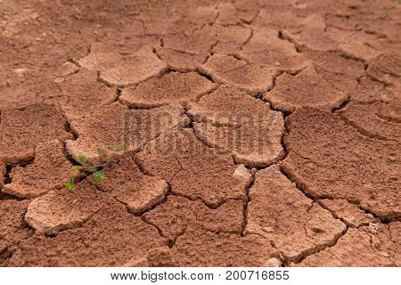 The surface of a grungy dry cracking parched earth for the textural background. Cracked mud pattern with Soil in cracks because of environment drought with green grass.
