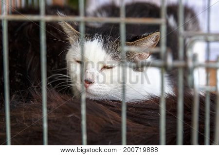 Volunteers distribute homeless cats during the action to distribute stray animals