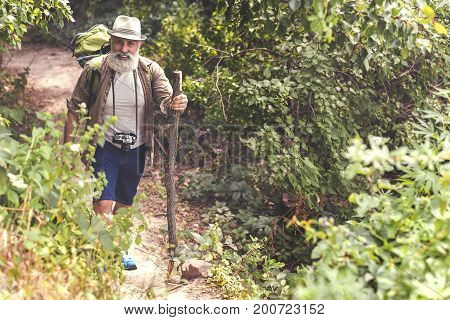Full length portrait of happy senior male tourist walking in woodland with pleasure. He is holding wooden stick and smiling. Copy space in right side