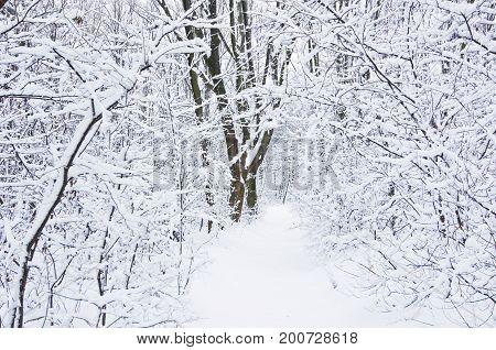 Forest path in winter, Kosutnjak forest, Belgrade, Serbia
