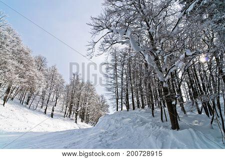 Sunny morning at mountain Vogel in slovenian Alps, Slovenia
