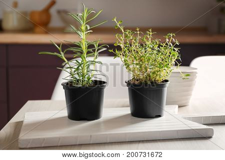 Green rosemary and thyme in pots on table