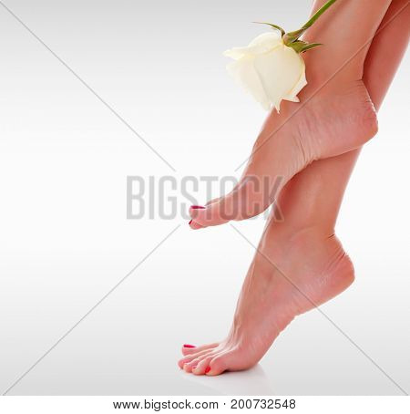 Closeup shot of woman's feet with white rose flower against a grey background with copyspace
