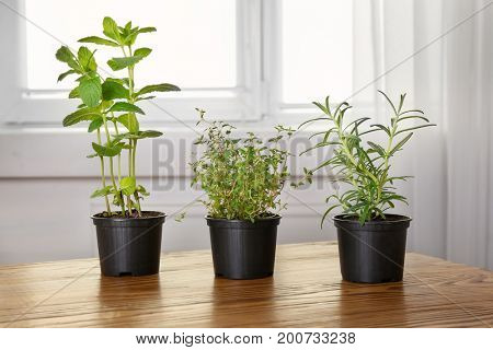 Pots with mint, thyme and rosemary on table
