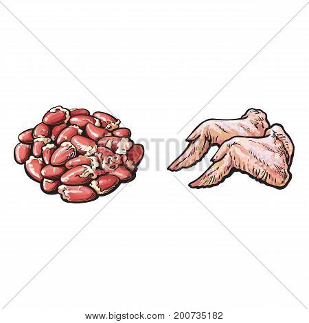 vector chicken wings, offal gizzards set sketch cartoon illustration. Isolated illustration on a white background Raw poultry cutted meat