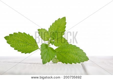 Fresh Green Mint On White Wooden Table
