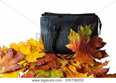 Leather bag with autumn leaves isolated on white background. Autumn bag sales concept