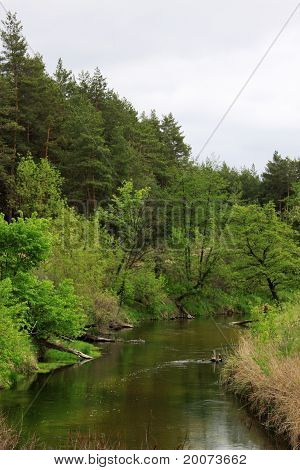 Forest Near A River