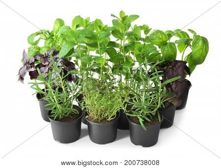 Pots with rosemary, basil, thyme and mint on white background