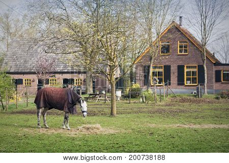 Horsecloth on horse at farm with tiny house on background. Knight horse eating grass. Cloth horse in countryside