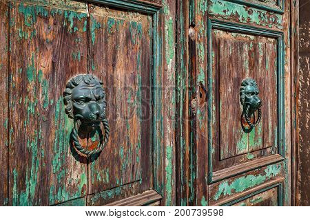 Two bronze metal door knobs in the shape of lion head on old wooden door.