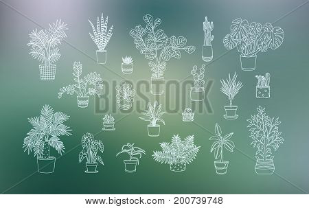 Different houseplants icons in line art style