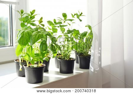 Pots with basil and rosemary on windowsill
