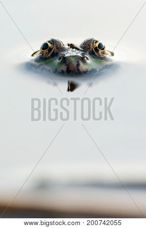 The fly sat on the nose of the frog